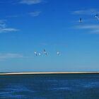 Wheeling free over the sea - Inverloch, Victoria by Heather Samsa