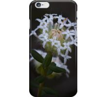 White Banjine (Pimelea ciliata) iPhone Case/Skin