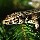 Common Lizard by Russell Couch
