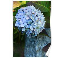 Blue Hortensia Poster