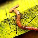 Wiggly worm by Renee Eppler