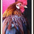 Mr. Rooster by Renee Eppler