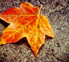 Fallen Leaf by Michelle  Edwards