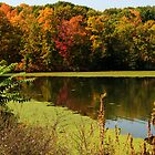 Autumnal colours in upstate New York by Susan Leonard