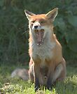 Toothy fox by Anthony Brewer