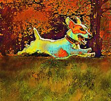 jack russell in autumn by jashumbert