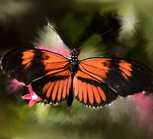 Black and Orange Butterfly by BeachBumPics