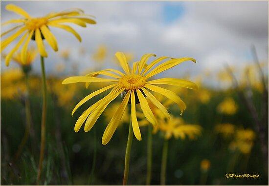 SPRING PLEASURE - Al die veld is vrolik.... by Magaret Meintjes