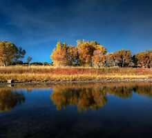 Blue Autumn by Bob Larson