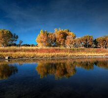 Blue Autumn by Bob Larson