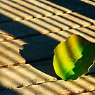 200809181732 Leaf by Steven  Siow