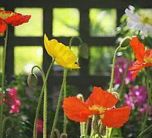 """""""Kitchen Garden"""" by Rosehaven"""