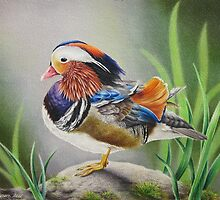 Mandarin Duck by lanadi