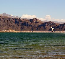 Lake Mead, Nevada by FrankieTease