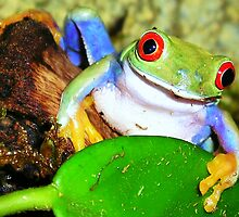 Red-Eyed Tree Frog  by Diana Graves Photography
