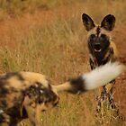 Wild & Playful Dogs by PBreedveld