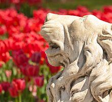 Lion Statue  by Kuzeytac