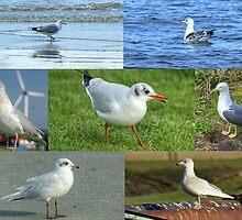 British Gulls Collage by VoluntaryRanger