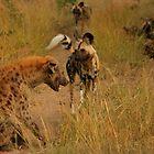 Hyena vs Dog by PBreedveld
