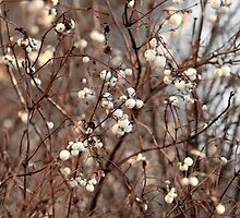 Snowberry     by mrivserg