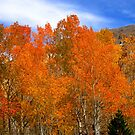 Wow Colors Of Fall by marilyn diaz