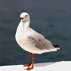 Gull by Ali Choudhry