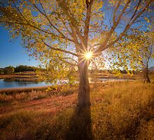 Autumn Peek by Bob Larson