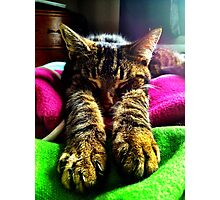 Check my Paws :) Photographic Print
