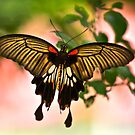 Sweet Butterfly by arthit somsakul
