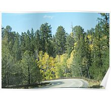 Fall Colors In Jemez Mountains Poster