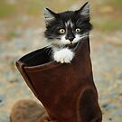 Puss in Boot by Lover1969