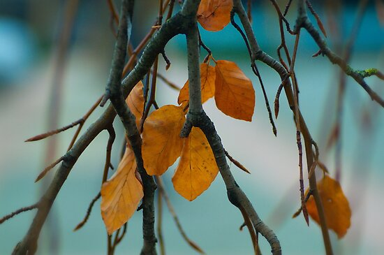 Autumn Love by Annie Lemay  Photography