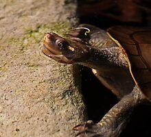 Turtle Bath-Time by Evita