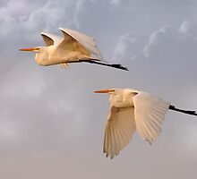 Flying Together At Dawn by Kathy Baccari