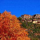 The tree and the  rock in Oak Creek Canyon  AZ by Onehun