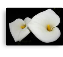 classic calla lilies Canvas Print