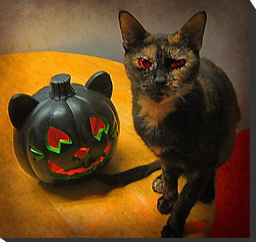 Happy Halloween Kitties by Jane Neill-Hancock