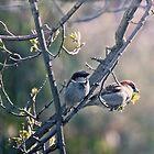 Two Little Birds by yolanda