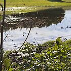 Reflection by AmandaJanePhoto