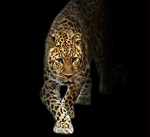 Prowling Amur iPhone Case by Mark Hughes