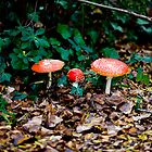 Tasmanian Mushrooms by desertsea