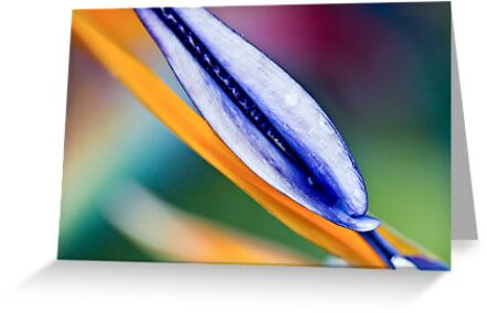 Bird of Paradise by Cathy Middleton