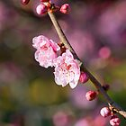 Spring Blossom - pink by desertsea