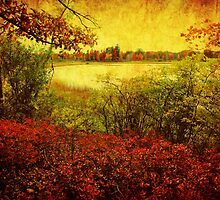 Autumn colors by Yool