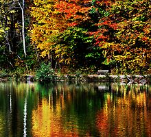 Autumn Reflections by Laurie Minor