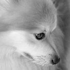 Maverick Little Fox 3 by ©Dawne M. Dunton