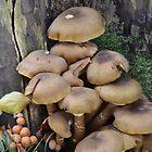 Fungus by Nicole W.