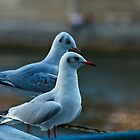 Seagulls by Julien Tordjman