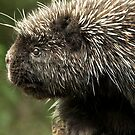 Prickly by Heather Haderly