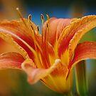 Flower II by Dan Phelps